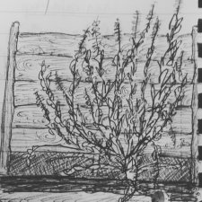 Study for London plant life 2017